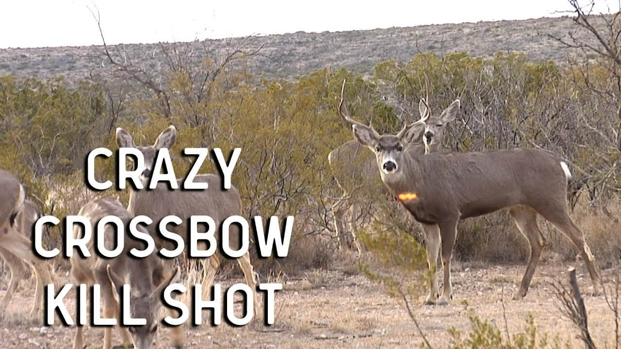 Where to shoot a deer with a crossbow