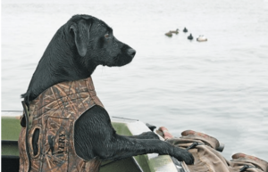 Make sure to bring a trained hunting dog